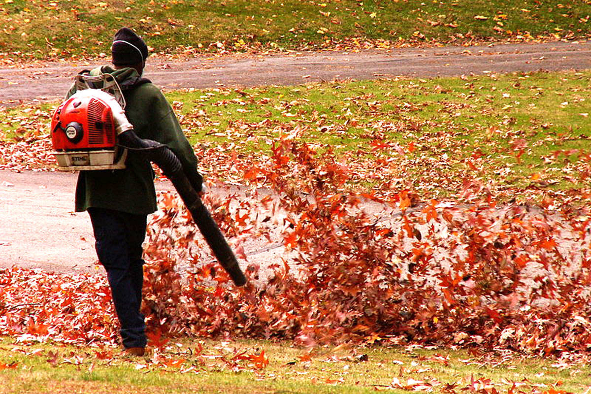 POLL: Should there be a ban on gas-powered leaf blowers?